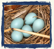 Would you like to experience the pure joy of finding these in a nestbox?
