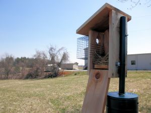 Nest box on the Woolwine House Bluebird Trail.