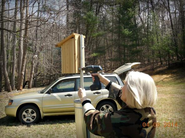 Installing a nest box for a new trail on VBS grant funs at a local state park.  The trail is monitored by the volunteer Virginia Master Naturalists.