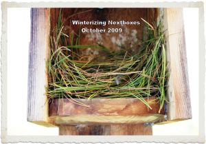 About an inch of grasses or pine needles for the floor should be placed.