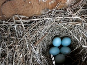 First Clutch March 2012