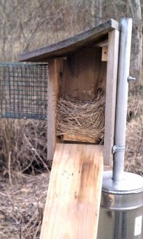 Nestbox of First Clutch 2012