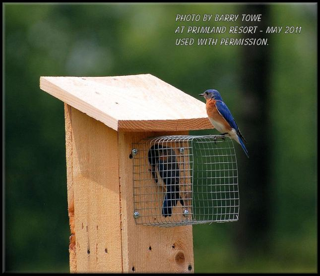 Build Bluebird House Plans Predator Guard DIY PDF wooden wagon plans free | husky26foa