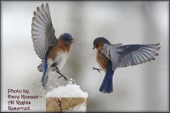 Snowcap Landing!