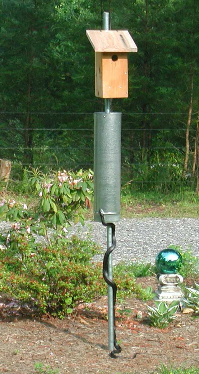 purple martin birdhouse plans free html with Snake Guards Wobbling Stovepipe Effective Against Most Ground Predators on Fancy Bird House For Sale moreover Plans Bird House together with Audubon Bird House Plans in addition Birdhouses in addition Snake Guards Wobbling Stovepipe Effective Against Most Ground Predators.