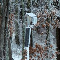 RECENT ICE STORMS - NESTBOXES ARE SHELTERS.