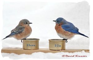"Isn't this adorable? Mr. Kinneer created this for his bluebirds. ""Hi, honey pie! It sure is cold! I can't find any more berries to eat, can you? Aren't ya glad we have these yummy mealworms?"""