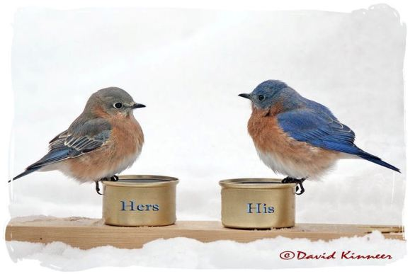 STILL HAVE SNOW AND COLD?  GET SOME MEALWORMS.