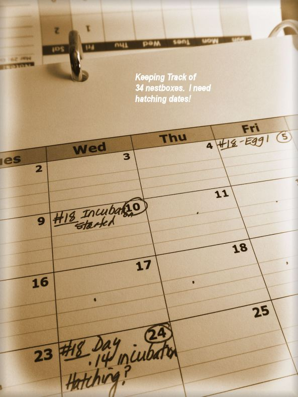 Keeping a calendar and the trail notebook is NUMBER 1 priority. Good Records is key!