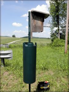 This nestbox was recently treated for ants!