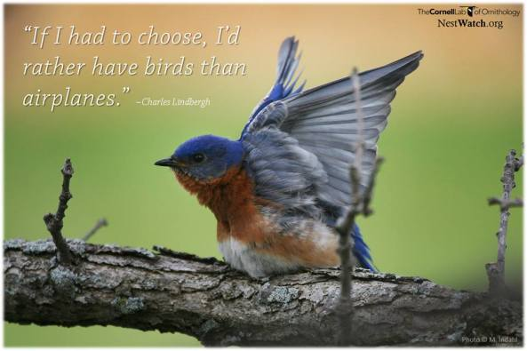 Are you having a great day?  Sure looks like this bluebird is!
