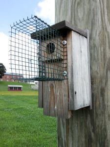 Nestbox with Pronged Noel Guard